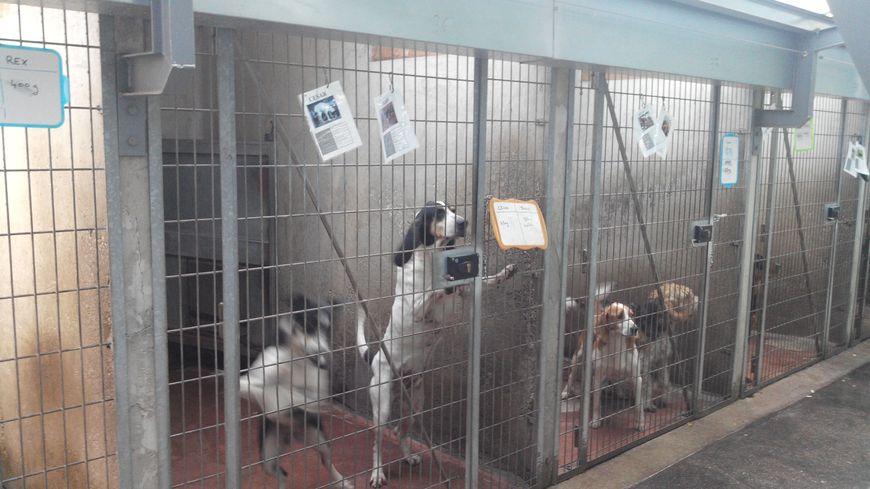 saint tienne 75 chiens et 50 chats vous attendent pour les portes ouvertes de la spa. Black Bedroom Furniture Sets. Home Design Ideas