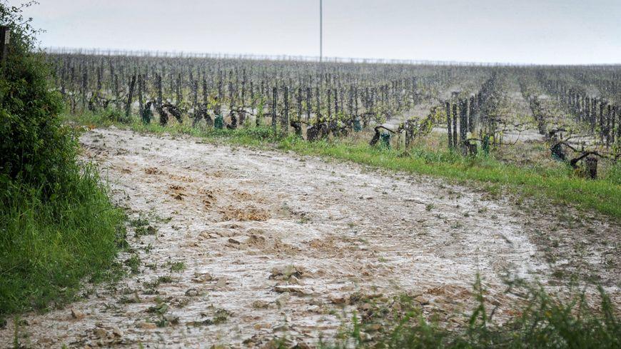 """Résultat de recherche d'images pour """"calamité agricole dans les vignes"""""""