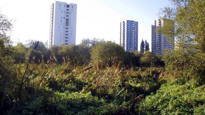 La petite amazonie la nature en plein c ur de la ville Piscine la petite amazonie