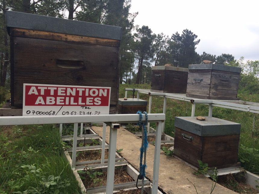 Olivier Belval, apiculteur à Banne en Ardèche, a perdu plus de 75% de ses abeilles. - Radio France