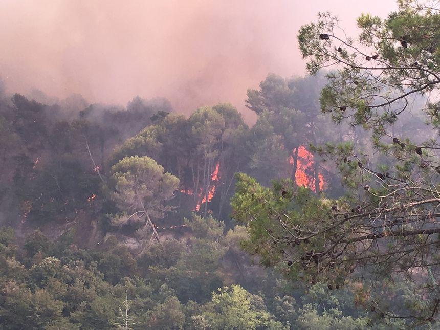 Le feu brûle la forêt à Castagniers - Radio France