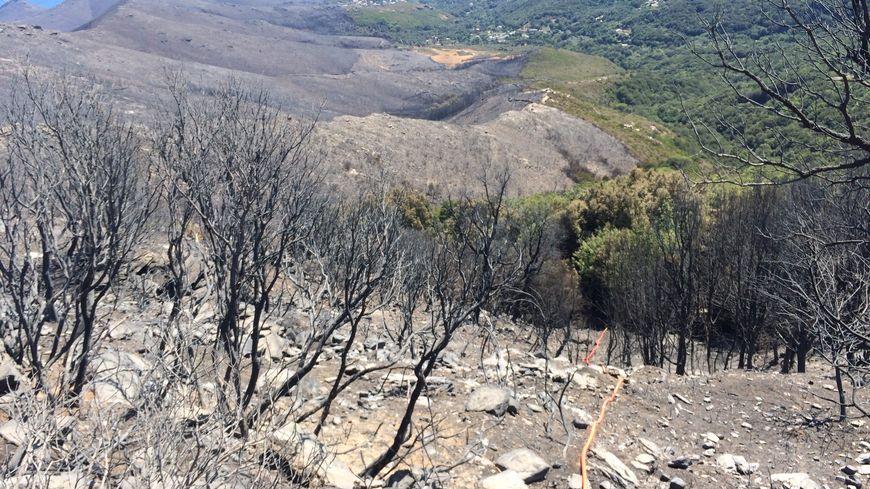 Les ravages du feu dans le Cap-Corse