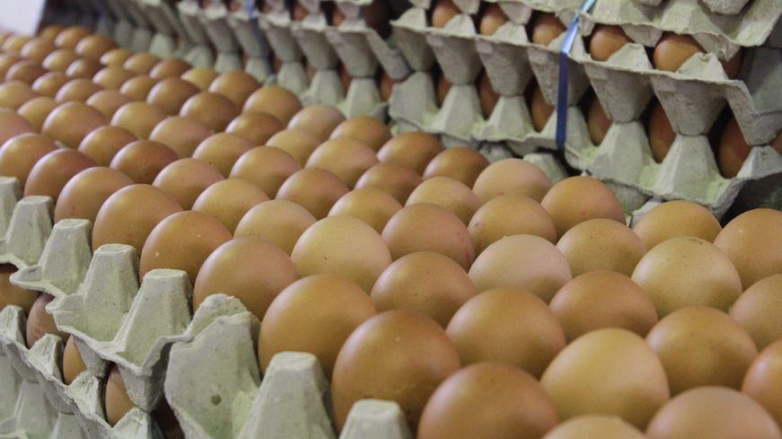 30.000 œufs contaminés au fipronil ont été livrés en France
